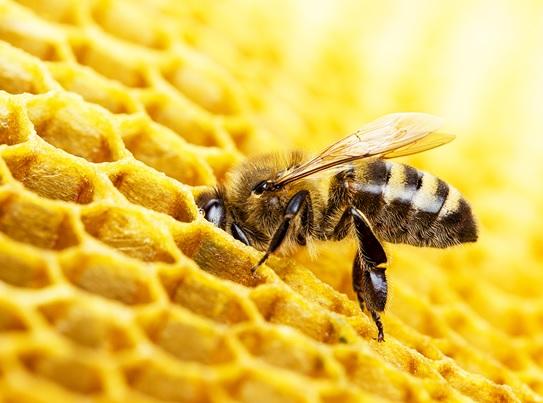 Voce-age-como-uma-abelha-por-carlos-pires-televendas-cobranca